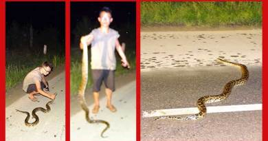 A Python measuring 6 feet long have been rescued from the road which was lying on the Hoj-Putin road near Midpu Secondary School