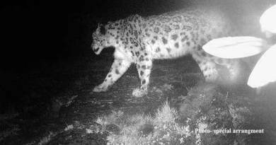 Arunachal- Snow leopard photographed in West Kameng