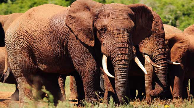 Speeding train killed six wild elephants in Assam