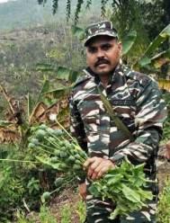 Arunachal: Poppy plantation destroys in Longding