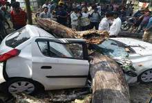 Photo of Arunachal : Tragic Road accident, Big tree fell down on a Car