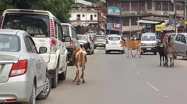 Itanagar:Animals still roaming on streets, Disregard of government orders