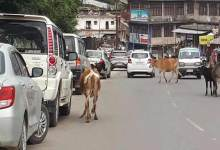 Itanagar: Animals still roaming on streets, Disregard of government orders