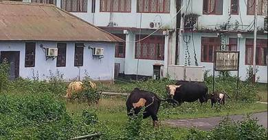 Arunachal:  Stray Animals moves from Road to RGU campus