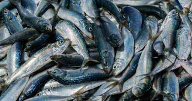 Arunachal: Formalin laced fish selling banned in East Siang