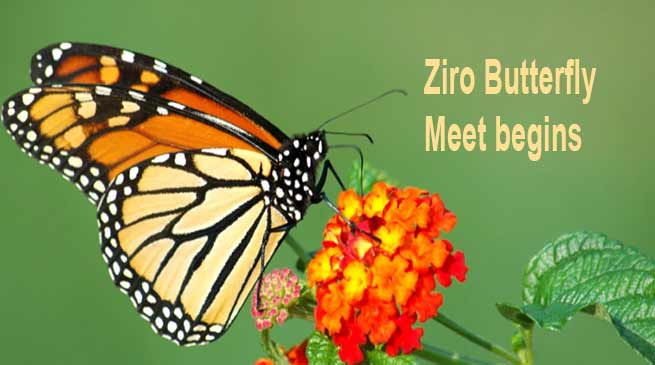 Arunachal: Fifth edition of the Ziro Butterfly Meet begins