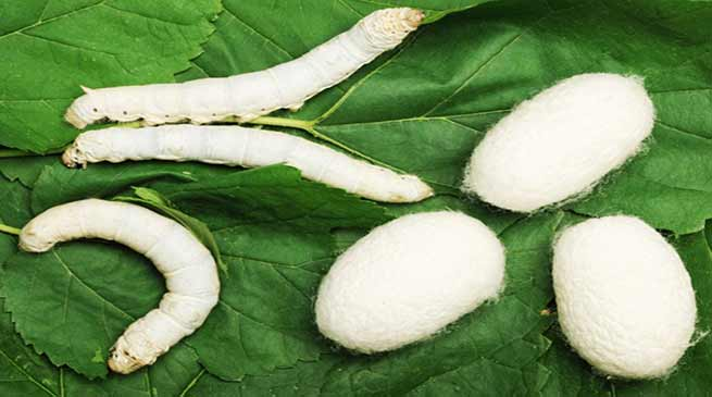Arunachal: Training on Silkworm and cocoon technology