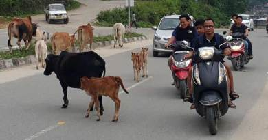 Itanagar: Clear stray animals from capital roads- DC directs IMC