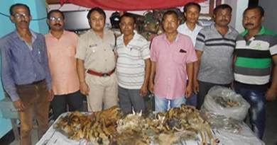 Arunachal: 3 arrested with Tiger Skin and Organs
