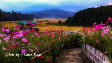 Photo of Arunachal: The Beauty of Ziro from the lens