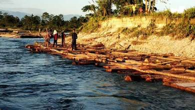 Photo of Arunachal: Illegal timber logging rampant in East Siang