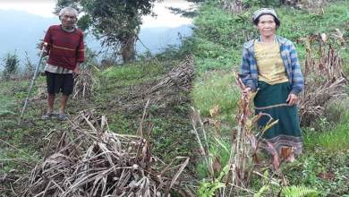 Photo of Arunachal: Loss assessment for cardamom crops in Sagalee sub-division begins