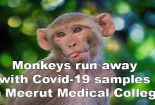 Photo of Monkeys run away with Covid-19 samples in Meerut Medical College