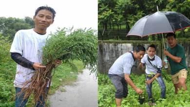 Photo of Arunachal: ABSU with others planted tree saplings marking Van Mahotsav Week