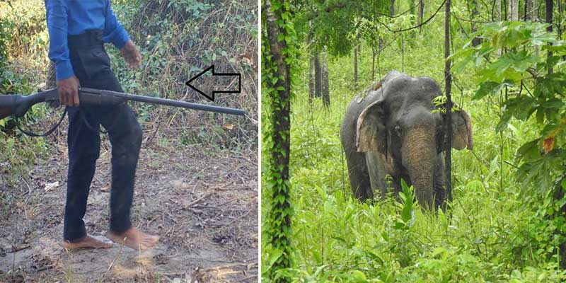 Arunachal: Patrolling staff shortages in D. Ering WL Sanctuary puts wild animals prone to poachers