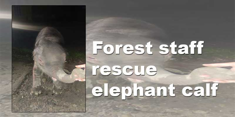 Arunachal: Forest staff rescue elephant calf from Remi WRC field