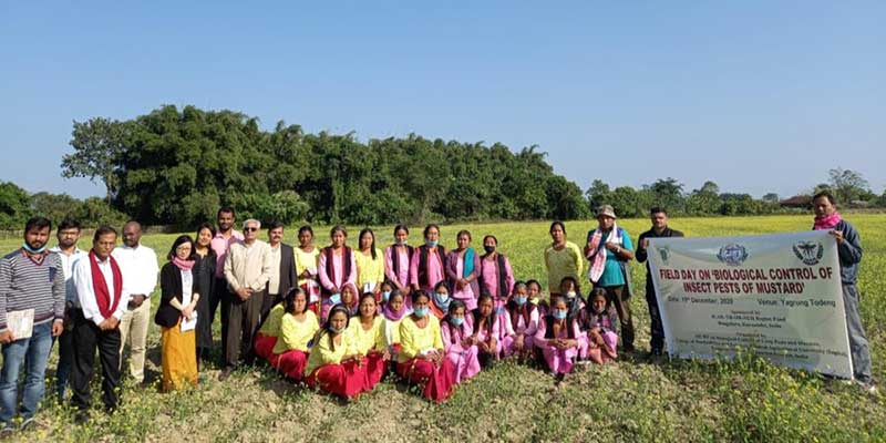 Arunachal: field day programme on 'biological control of insect pests of mustard' held at yagrung todeng village
