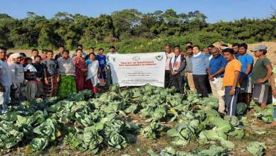Arunachal: field day programme on 'bio intensive pest management in cabbage' held at jampani village