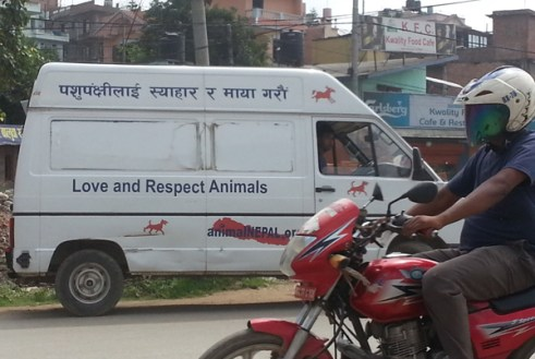 Animal Nepal to the rescue!