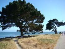 The beautiful coastal trees