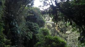 A faraway suspension bridge in Selvatura Park