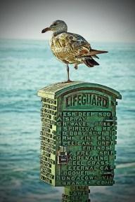 bird on lifeguard