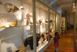 Pics from Meera visits the Harvard Museum of Natural History by Arun Shanbhag