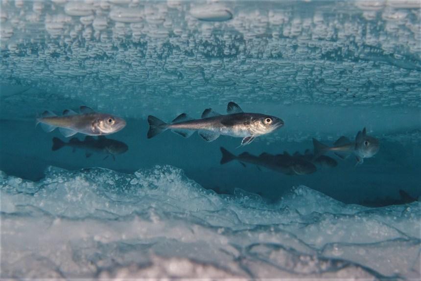 Polar cod
