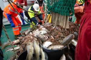 fisk og forskning