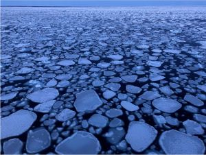 ice pancakes in Barents Sea