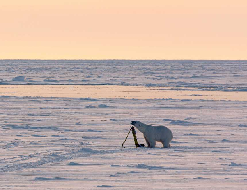 Polar bear checks out equipment on the ice. Photo Andreas Wolden