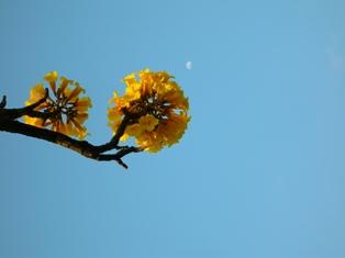 detalhe da floração no fim de tarde