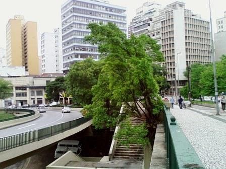 Figueira no concreto do Viaduto Maria Paula, Centro de SP. Ricardo Cardim