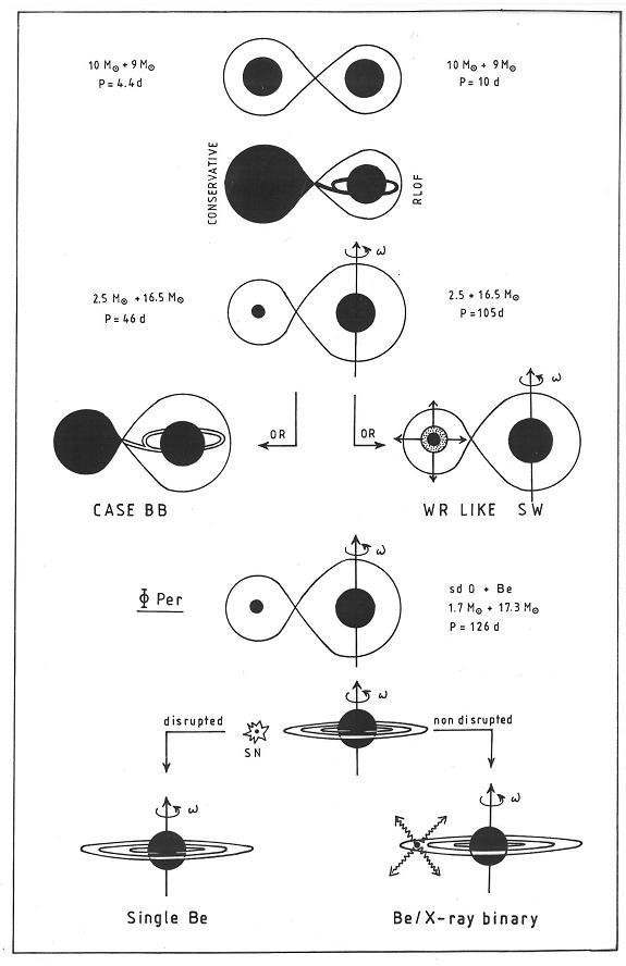 Evolution of intermediate mass and massive binary stars