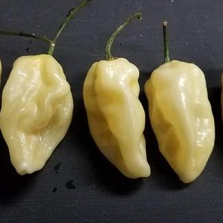 Peach Naga Cross (White)