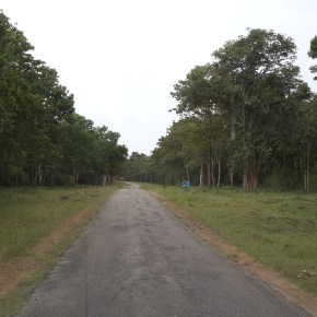 A country road in Kodagu
