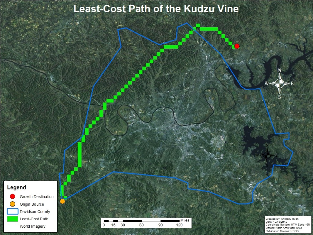 small resolution of kudzu plant diagram