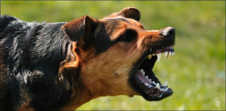 Photo of Canine chunk left parasite in man's eye eliminated efficiently