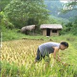 Read more about the article ?How to grow and harvest rice