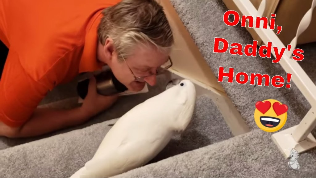 Baby Cockatoo Freaks Out When Daddy Comes Home 😍💕