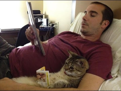 Read more about the article Funny and Cute Cat Videos – Cats and Owners are the best friends