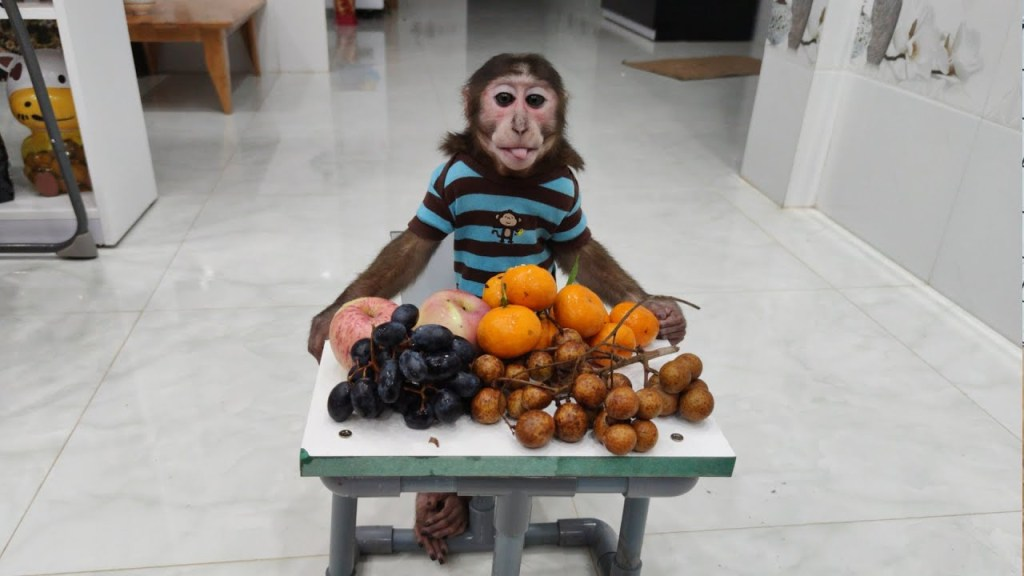 Read more about the article YoYo Jr has a new table and filled with fruit