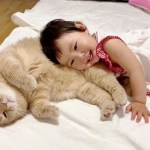 Read more about the article Loving Family Cat Always There For His Little Human Sister