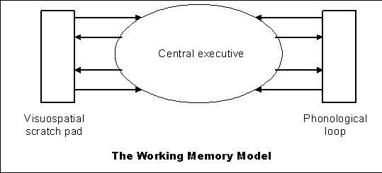 Introductory Psychology / STMandLTM