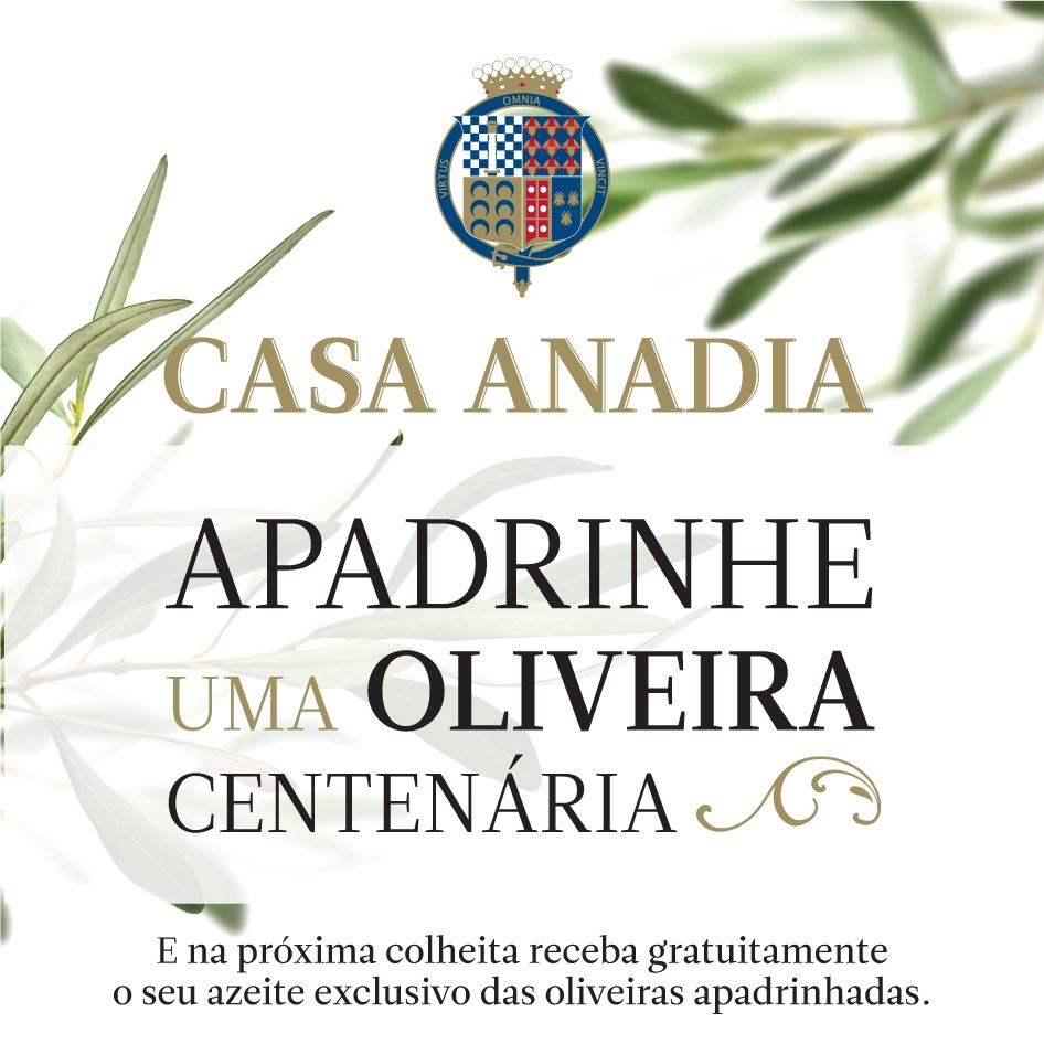 Azeite Casa Anadia com campanha para apadrinhar oliveiras centenrias  Gastronomia  Cardpio