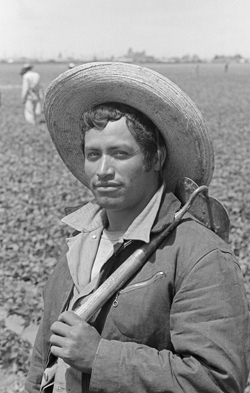 A bracero with a short-handled hoe over his shoulder stands in a California field.