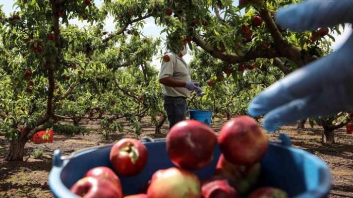 Cómo desinfectar frutas y verduras para evitar el contagio de coronavirus