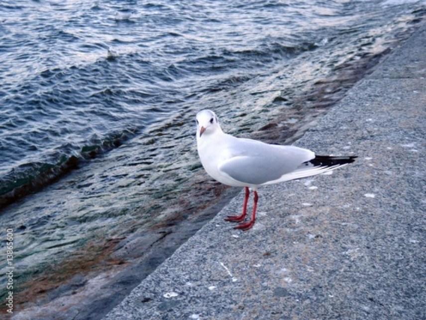 Mouette sur un muret près d'un lac | Vendre ses photos en ligne