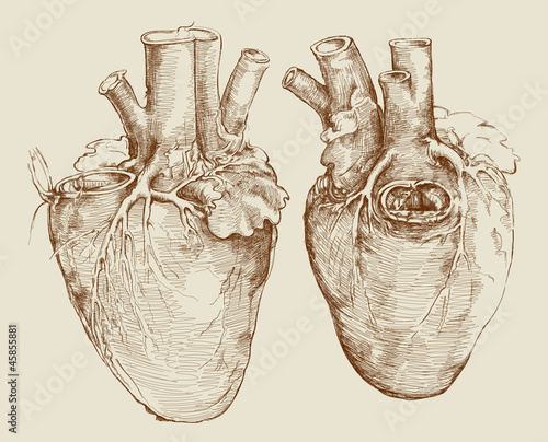 heart based on drawing