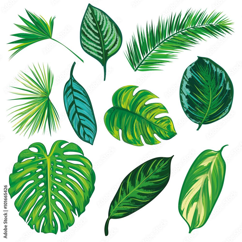 Urwald Blätter Zum Ausmalen